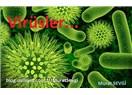 Virüs, genom teknolojisi ve tehlikeli inovasyonlar