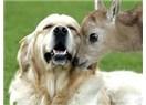 Eminönü'nde de Evimin Önünde de Hayvan Seviyorum