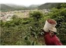Rize'de Kahve Tarımı Potansiyeli