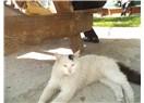 Sokak Kedim Benekli yok !