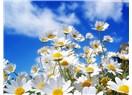 Baharla gelen güzellikler - yeni ablalar