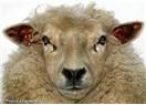 Meclis'te sükuneti sağlamak için koltuk derileri hangi hayvandan olmalı?
