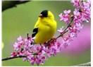 Bahçedeki kuşların sempozyumu