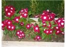 1 Mayıs Amele (İşçi ve Emekçi) Bayramı kutlu olsun...