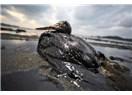 Mersin'de petrolle yüzmek...