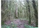 Şimşir Ormanı Ölüyor!!!...