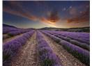 Fransa'nın Güneyindeki Muhteşem Bölge: Provence