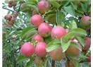 Zencefilli elma marmelatı