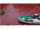 Yunus Katliamı-Japonya Taiji kasabası