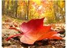 Sonbahar aşığı