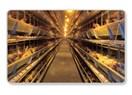 Kafes tavuklarının eti mutsuzluk hormonları ve enzimleri yüklü ve helal et değil