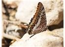 O muhteşem vadi; Kelebekler Vadisi