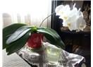 Kadın ve orkide