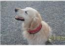 Köpek sevgisi ve Sadakatin sembolü olan köpek hikâyesi,