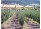 Türkiye'de Elma Üretimi