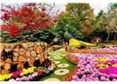 Güzel bahçe
