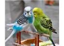 Ayşe ile Maviş