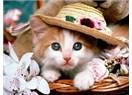 Kedilere yuva yapalım!