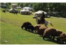 Orta Asya Türklerinin Bozkır ve Göçebe yaşam tarzları ve yarattıkları kültürler...