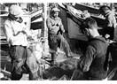 Martı ve Balıkçı