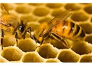 Arılar, insan ve bilgisayar