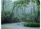 Ormanlara neden daha fazla yağmur yağar?