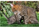 Hayvanlardaki müthiş anne şefkati yaratılışın eseridir…