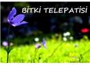 Bitki Telepatisi
