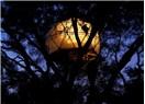 Ağaçta hayat var: ünlü ağaç ev tasarımcısı Dustin Feider