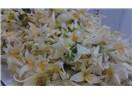 Biyomedikal bitkiler-VI, zambak
