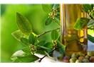 Biyomedikal Bitkiler- X, Defne
