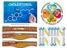Kimyanın bahtsız çocuğu: kolesterol