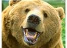 Ormanda ayı ile karşılıklı  ağız dalaşı yaptı. Ayı adama bağırdı. Adam da ayıya. Ayı kaçtı