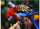 Kuşlardaki akıl bilim adamlarını şaşırtıyor