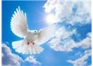 Barışın rengi
