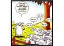Koyun ile sürü