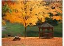Ekim yapraklarında dinsellik