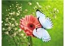 Sevdiceğim beyaz kelebeğim
