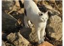 Kedileri candan sevmek ve sevilmesine bol bol katkıda bulunmak