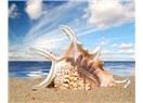 Sular çekiliyor, ölü deniz hayvanlarının kabukları kalıyor geri