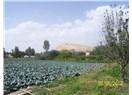 Medeniyetler şehri Erciş