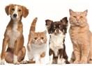 Peygamberimizin hayvan sevgisi nasıldı-1