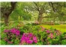 Gözyaşımız ile Rıza için gönül bahçesinde yürümek…
