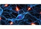 Beyinler arası Ağ kurulabilir mi? – (Sinir Sistemi ve Beyin)