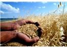 Kabul edelim ki,tarımda ve hayvancılıkta hiç bir şey yapılmadı...