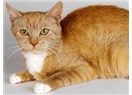 Süper Kedi Temel'in maceraları-1 Benim güzel hayatım