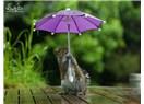 Şemsiye ve sincap
