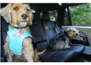 Evcil hayvanınızı aracınızda nasıl taşımalısınız?