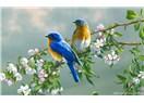 Haiku . B2. Kuşlar