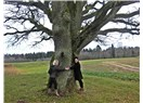Ağaçla Terapi :Şifanın kaynağı